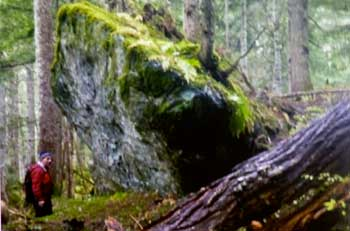 Giant boulder brought to Houlte Creek by an avalanche