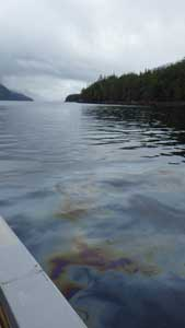 Oil slick in Grenville Channel (Gitga`at First Nation Guardians)