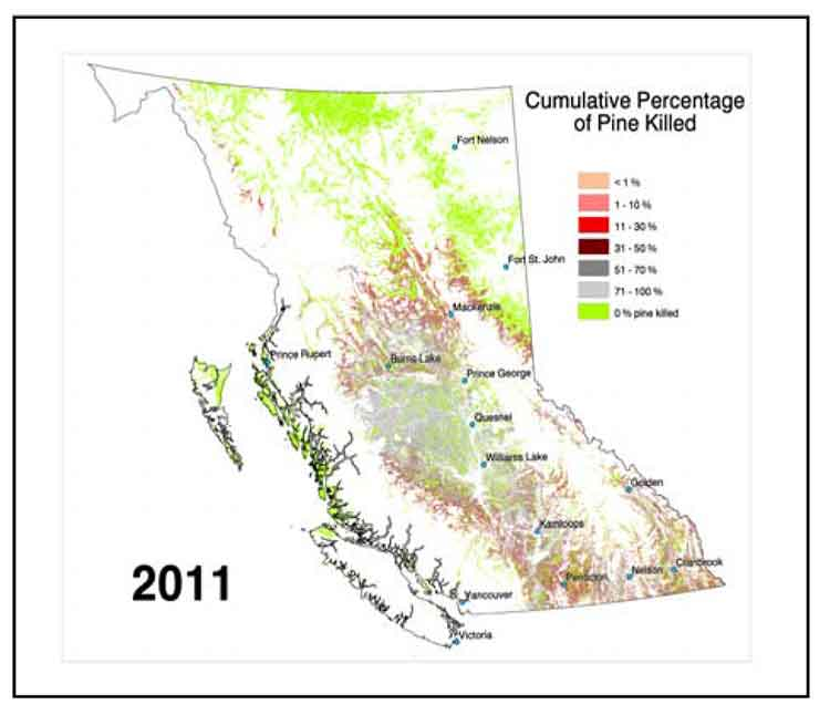 Map showing pine beetle infestation in British Columbia (BC Forests)