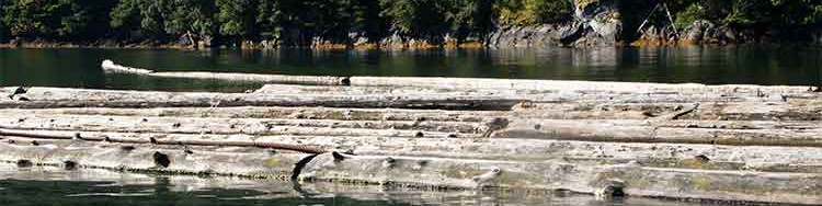 Clio Bay:  What happens to sunken logs?