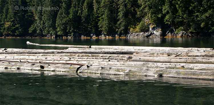 Logs at Clio Bay