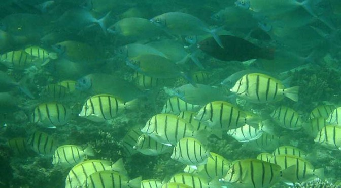Tropical fish, climate change migration growing threat to seagrass, kelp beds, study says