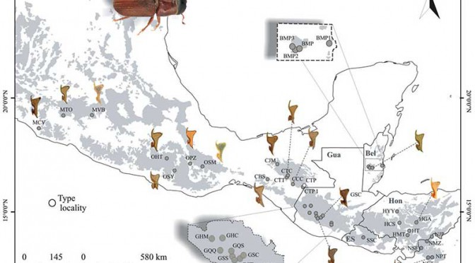 "Scientists identify ""new"" species of pine beetle devastating forests in Central America"