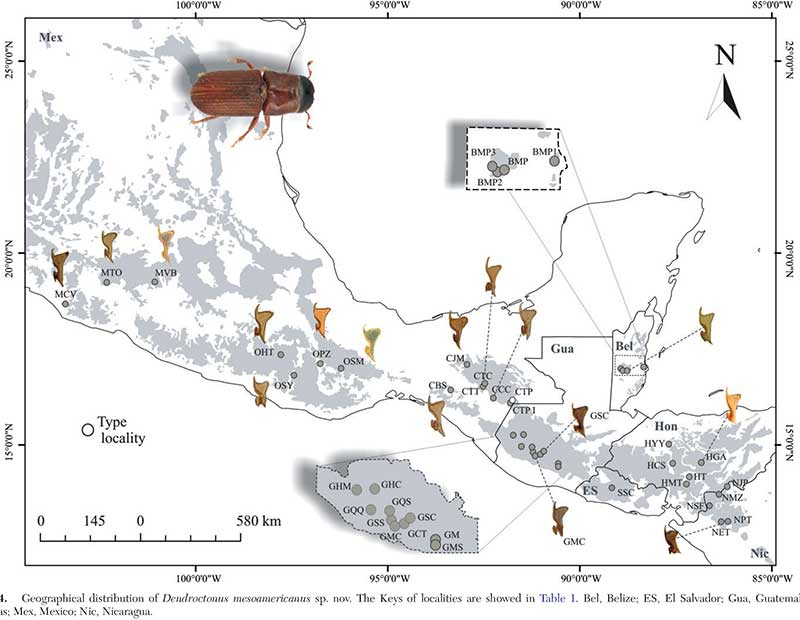 Map showing mesoamerican pine beetle