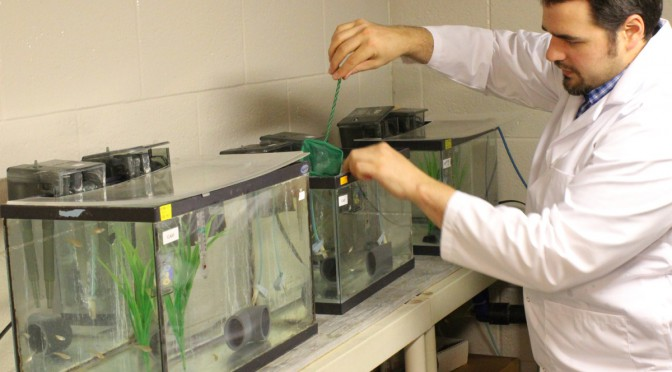 Post-doctoral fellow Barry Madison works with the fish in Valerie Langlois' lab. (Queen's University)