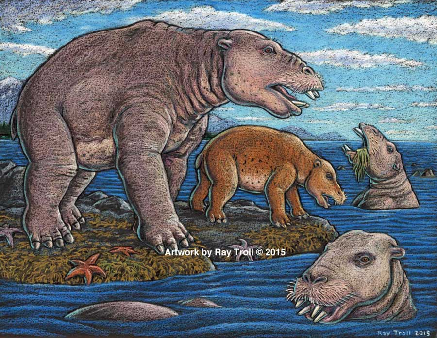 Discovery of the new genus and species that resembled a hippo and swam like a bear, from Unalaska indicates the desmostylian group was a successful group that was larger and more diverse than previously known. (Artist: Ray Troll)